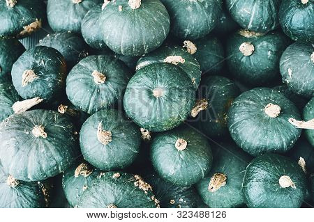Colorful Pumpkins And Squashes In Different Varieties. Background