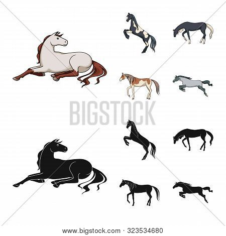 Isolated Object Of Breed And Equestrian Icon. Set Of Breed And Mare Stock Symbol For Web.