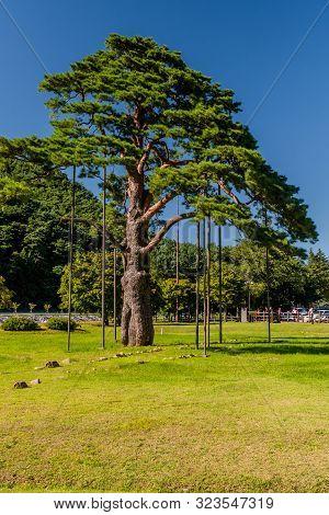Boeun-gun, South Korea; September 13, 2019: Jeongipumsong Pine Tree Over 600 Years Old At Entrance T