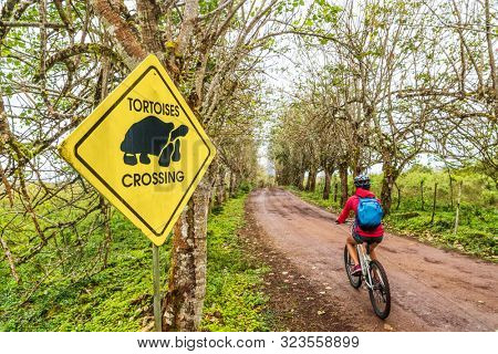 Galapagos Giant Tortoise funny sign and woman tourist cycling on bike on Santa Cruz Island on Galapagos Islands. Animals, nature and wildlife video of tortoise in highlands of Galapagos, Ecuador.