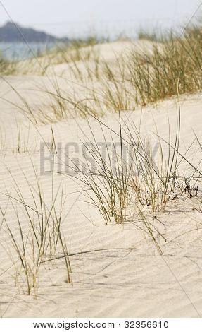 Beach Sand Dune, Cornwall, Uk.