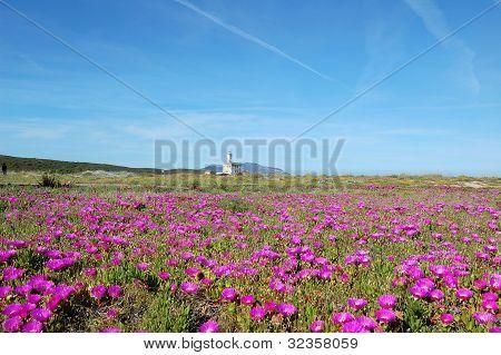 Sardinia rural landscape