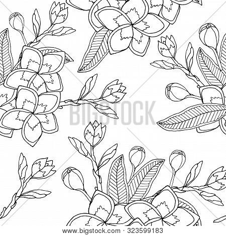 Line Art Plumeria Or Frangipany Flower Seamless Pattern Vector. Exotic Flower Frangipany. Bouquet Of