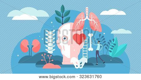 Anatomy Vector Illustration. Flat Tiny Body Parts Science Persons Concept. Education About Inner Org