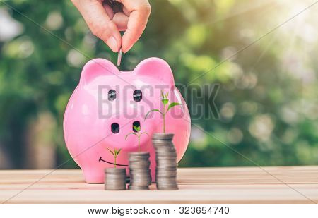 Hand Putting A Coin Into Piggy Bank. Tree Grows On Coins. Planning Savings Money Of Coins To Buy A H