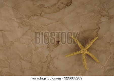 Starfish Pentagonal Echinoderms Sedentary Animals Invertebrate Class On Old Paper Background