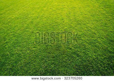 Fresh Green Grass On Golf Field Pattern Background.
