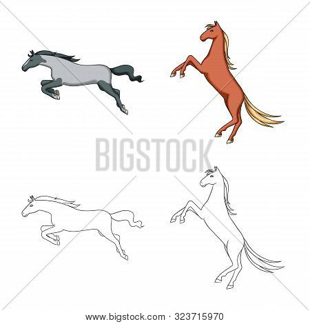 Vector Illustration Of Breed And Equestrian Sign. Set Of Breed And Mare Vector Icon For Stock.