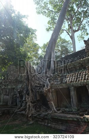 Huge Roots Of A Tropical Tree. Medieval Ruins In A Rainforest.