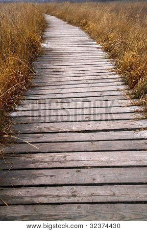 Boardwalk Through The Hiller Moor