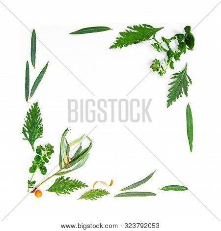 Tea Herbs Still Life Flatlay On White Background