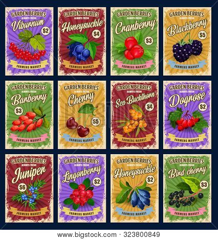 Garden Natural Berries, Retro Price Cards. Vector Viburnum And Honeysuckle, Cranberry And Blackberry