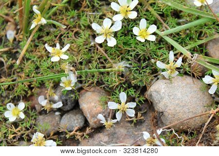 The Stones And White Flowers In The Summer Forest