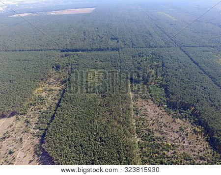 Deforestation. Ecology of Ukrane.The fate of the felled pine forest. Ukraine is increasing timber exports to the European Union after the 2014 coup. (drone image).September 23,2019. Near Kiev,Ukraine
