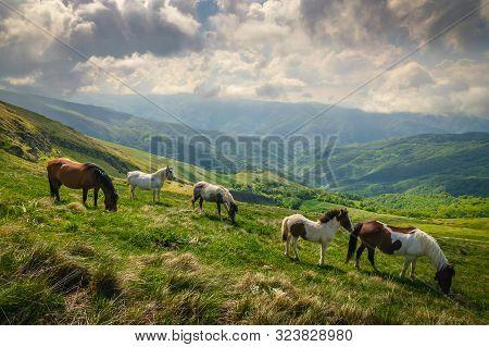 Landscape Wild Horses In Nature. Amazing Nature Landscape. Close Up Of Wild Horses In Nature. Horse