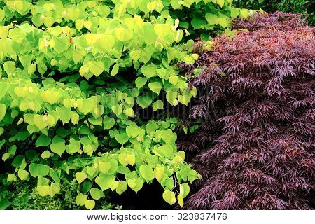Two Different Types Of Coloured Leaves On Trees