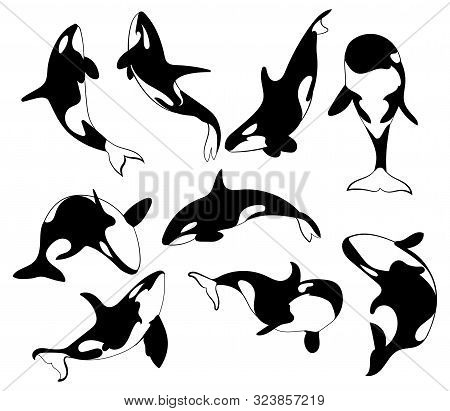 Set Of Killer Whales. Collection Of Stylized Orca Whale. Black White Vector Illustration Of Sea Pred