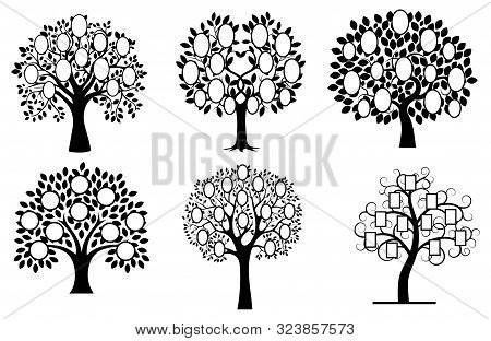 Set Of Family Trees. Collection Of Black And White Family Tree Silhouettes. Vector Illustration Of P