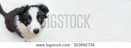 Funny Studio Portrait Of Cute Smilling Puppy Dog Border Collie Isolated On White Background. New Lov