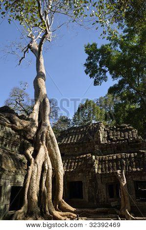 Strom, který roste v chrám Ta Phrom
