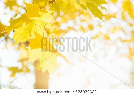 Fall, Autumn, Leaves Background. Landscape In Autumn Season Beautiful Autumn Landscape With Fallen Y