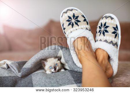 Slippers on women's legs and kitten. Cat near soft comfortable home slipper