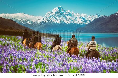 Travelers Ride Horses In Lupine Flower Field, Overlooking The Beautiful Landscape Of Mt Cook Nationa