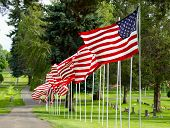 Flags waiving on a nice row at a cemetary poster
