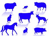 Farm animals silhouettes with shadows on a white background poster