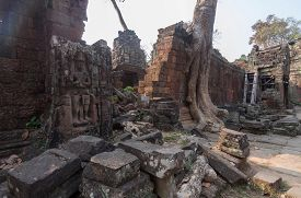 Huge Roots  On The Temple In Pra Khan ,siem Reap,cambodia