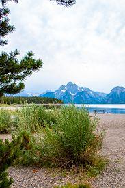 Vegitation On Jackson Lake Swim Beach In Colter Bay Village In Grand Teton National Park Wyoming