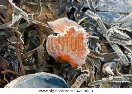 Leaf On The Beach With Crystals