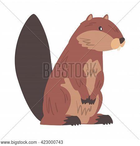 Brown Beaver Wild Rodent Animal Cartoon Vector Illustration