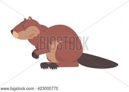 Side View Of Brown Beaver, Wild Rodent Mammal Animal Cartoon Vector Illustration