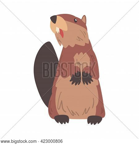 Cute Funny Brown Beaver Standing On Its Hind Legs, Wild Rodent Animal Cartoon Vector Illustration