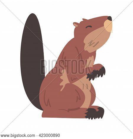 Cute Brown Beaver, Wild Rodent Mammal Animal Cartoon Vector Illustration