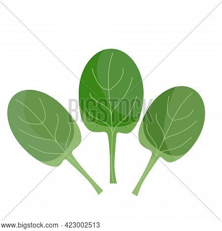 Green Spinach, Eco Vegan Food, Isolated On White