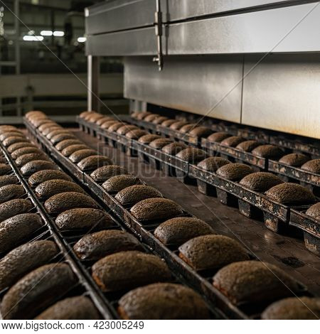 Bakery Factory For Baking Bread. Whole Loaves Of Dark Or Black Bread In Rows. Fresh Baked Whole Grai