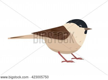 Cute Small Bird Icon Isolated On White Background. Chestnut Backed Chickadee - Poecile Rufescens. Ve