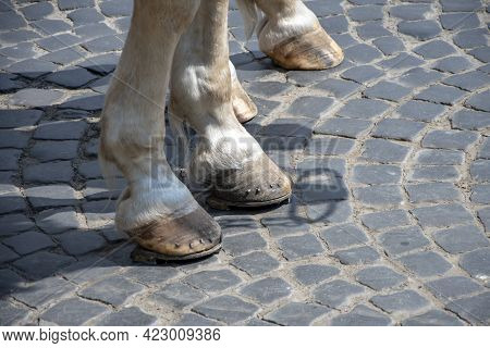 Horse Hooves Are Lined With Horseshoes, Metal Nails Are Visible, The City Pavement.