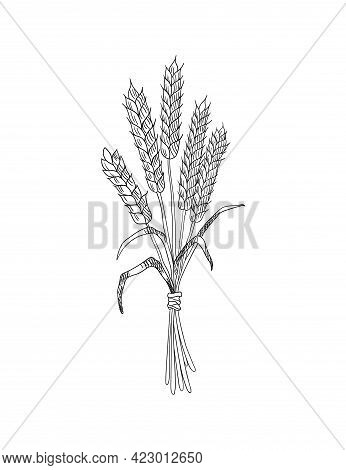 Wheat Grain Sketch. Hand Drawn Black And White Ears Of Wheat. Cereals Agriculture, Organic Farming,