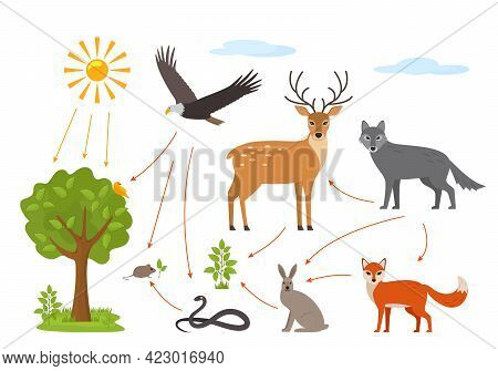Educational Banner For Kids About The Food Chain In The Wild. Wildlife Food Pattern Diagram. Vector