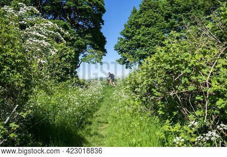 Grantham, England- May 30, 2021. Cyclist Riding A Bicycle In The Middle Of A Green Landscape In The
