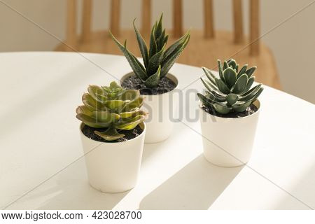 Succulents And Cactus In Different Concrete Pots On The White