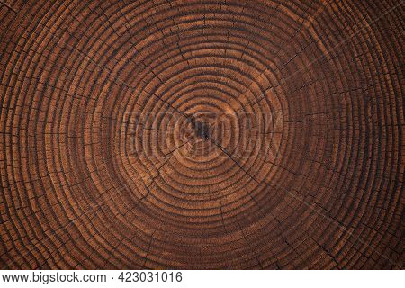 Beautiful Cut Tree Trunk With Annual Rings And Cracks. Wood Texture Background. Wood Board Ring