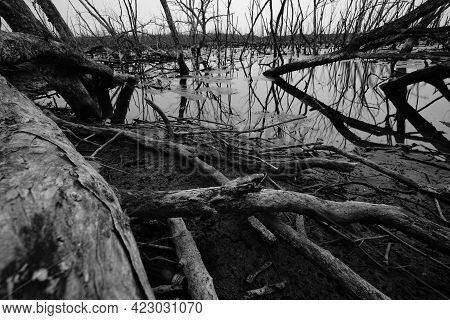 Dead Tree In Flooded Forest. Environmental Crisis From Climate Change. Dark Background For Death, Sa