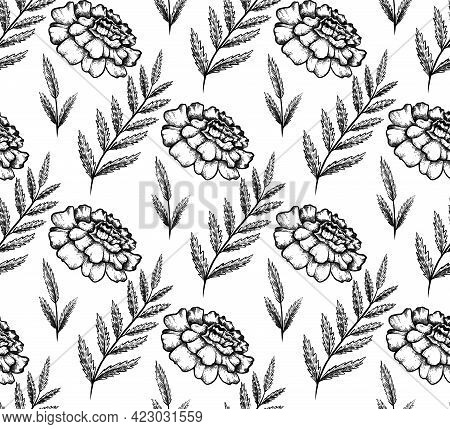 Seamless Monochrome Pattern With Botanical Sketch Of Marigold Flower And Branch With Leaves. Vector