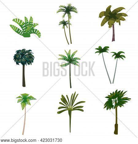 Palm Trees Tropical Exotic Plants Set. Collection Botanical Flora Jungle Tropic Nature. Vector Carto