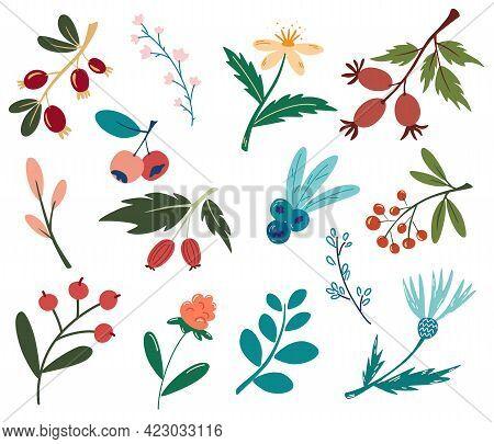 Set Of Berries And Flowers. Forest Plants, Berries, Flowers. Vegan, Farm, Detox, Natural Food Concep