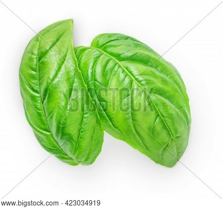Fresh Green Basil Leaves Isolated On White Background, Top View. Basil Herb
